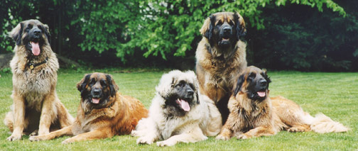 Leonberger Group